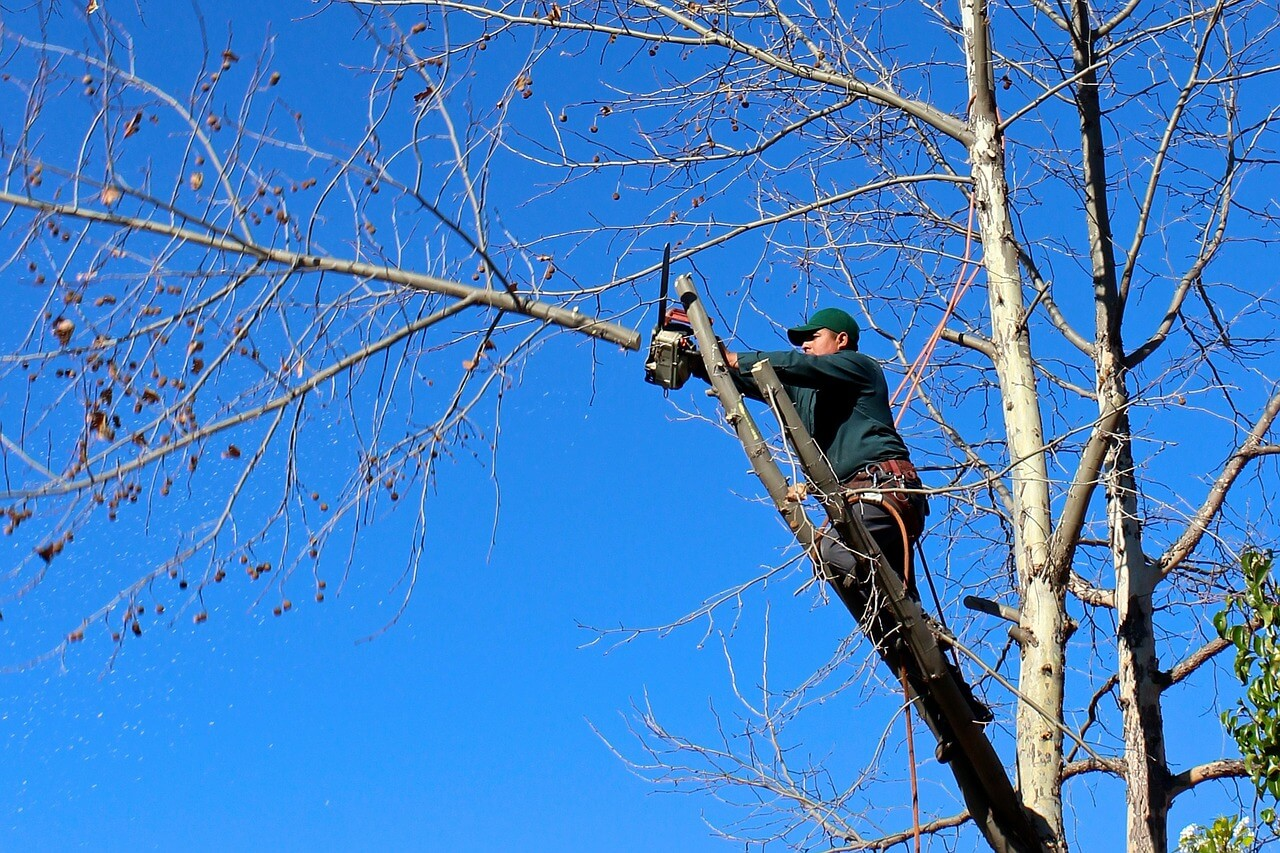 Contact Us-Santee CA Tree Trimming and Stump Grinding Services-We Offer Tree Trimming Services, Tree Removal, Tree Pruning, Tree Cutting, Residential and Commercial Tree Trimming Services, Storm Damage, Emergency Tree Removal, Land Clearing, Tree Companies, Tree Care Service, Stump Grinding, and we're the Best Tree Trimming Company Near You Guaranteed!