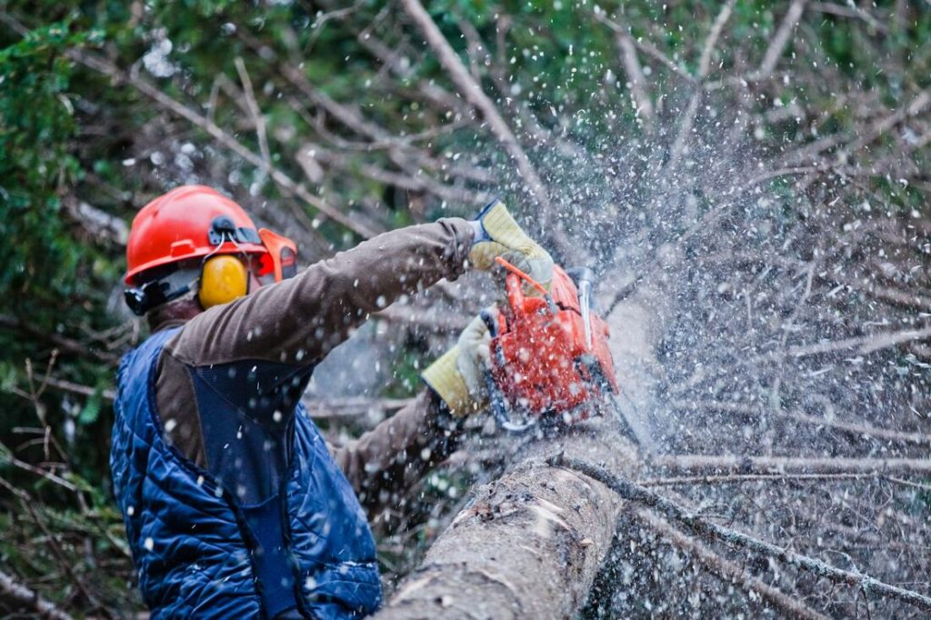 Eucalyptus Hills-Santee CA Tree Trimming and Stump Grinding Services-We Offer Tree Trimming Services, Tree Removal, Tree Pruning, Tree Cutting, Residential and Commercial Tree Trimming Services, Storm Damage, Emergency Tree Removal, Land Clearing, Tree Companies, Tree Care Service, Stump Grinding, and we're the Best Tree Trimming Company Near You Guaranteed!