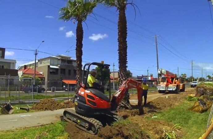 Palm Tree Removal-Santee CA Tree Trimming and Stump Grinding Services-We Offer Tree Trimming Services, Tree Removal, Tree Pruning, Tree Cutting, Residential and Commercial Tree Trimming Services, Storm Damage, Emergency Tree Removal, Land Clearing, Tree Companies, Tree Care Service, Stump Grinding, and we're the Best Tree Trimming Company Near You Guaranteed!