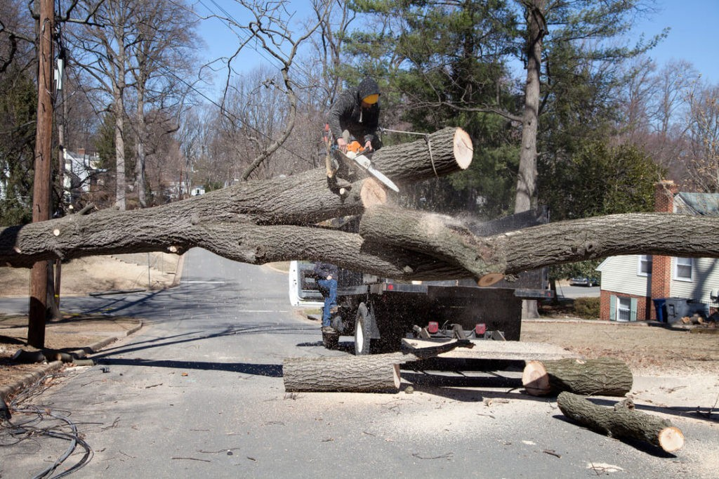 Residential Tree Services-Santee CA Tree Trimming and Stump Grinding Services-We Offer Tree Trimming Services, Tree Removal, Tree Pruning, Tree Cutting, Residential and Commercial Tree Trimming Services, Storm Damage, Emergency Tree Removal, Land Clearing, Tree Companies, Tree Care Service, Stump Grinding, and we're the Best Tree Trimming Company Near You Guaranteed!