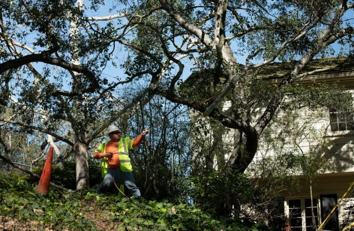 San Carlos-Santee CA Tree Trimming and Stump Grinding Services-We Offer Tree Trimming Services, Tree Removal, Tree Pruning, Tree Cutting, Residential and Commercial Tree Trimming Services, Storm Damage, Emergency Tree Removal, Land Clearing, Tree Companies, Tree Care Service, Stump Grinding, and we're the Best Tree Trimming Company Near You Guaranteed!