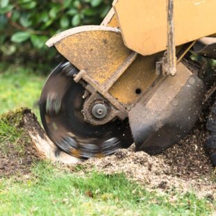 Stump Grinding-Santee CA Tree Trimming and Stump Grinding Services-We Offer Tree Trimming Services, Tree Removal, Tree Pruning, Tree Cutting, Residential and Commercial Tree Trimming Services, Storm Damage, Emergency Tree Removal, Land Clearing, Tree Companies, Tree Care Service, Stump Grinding, and we're the Best Tree Trimming Company Near You Guaranteed!