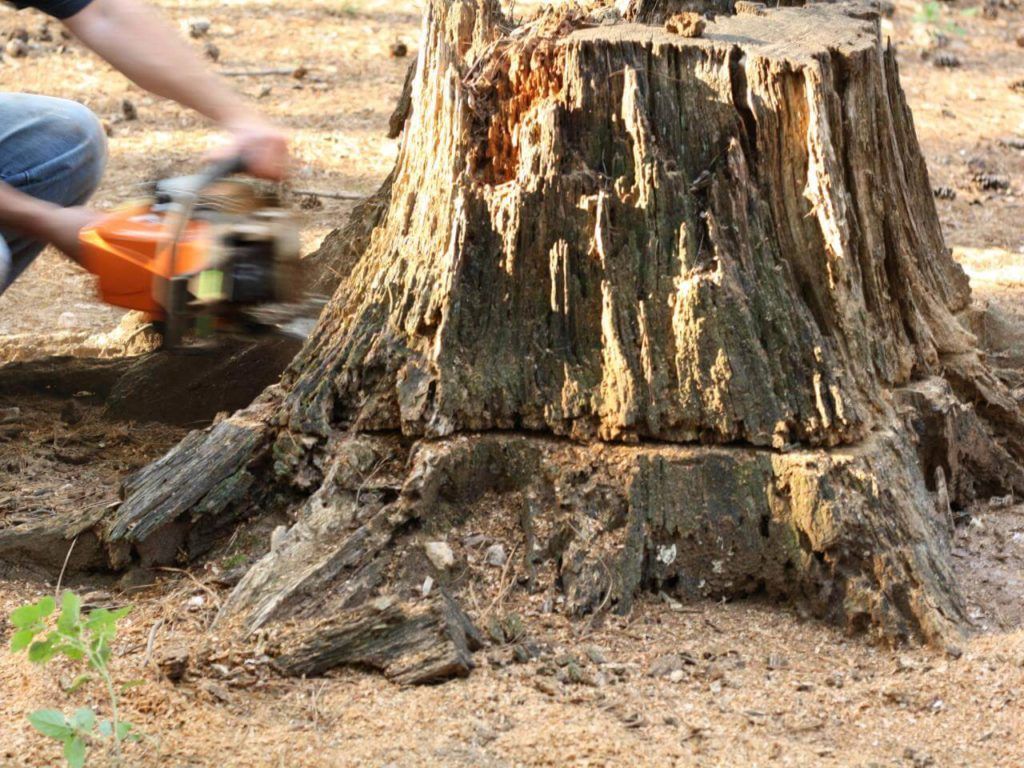Stump Removal-Santee CA Tree Trimming and Stump Grinding Services-We Offer Tree Trimming Services, Tree Removal, Tree Pruning, Tree Cutting, Residential and Commercial Tree Trimming Services, Storm Damage, Emergency Tree Removal, Land Clearing, Tree Companies, Tree Care Service, Stump Grinding, and we're the Best Tree Trimming Company Near You Guaranteed!