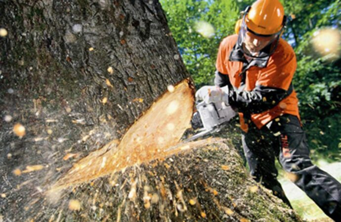 Tree Cutting-Santee CA Tree Trimming and Stump Grinding Services-We Offer Tree Trimming Services, Tree Removal, Tree Pruning, Tree Cutting, Residential and Commercial Tree Trimming Services, Storm Damage, Emergency Tree Removal, Land Clearing, Tree Companies, Tree Care Service, Stump Grinding, and we're the Best Tree Trimming Company Near You Guaranteed!