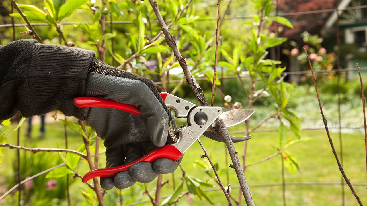 Tree Pruning-Santee CA Tree Trimming and Stump Grinding Services-We Offer Tree Trimming Services, Tree Removal, Tree Pruning, Tree Cutting, Residential and Commercial Tree Trimming Services, Storm Damage, Emergency Tree Removal, Land Clearing, Tree Companies, Tree Care Service, Stump Grinding, and we're the Best Tree Trimming Company Near You Guaranteed!