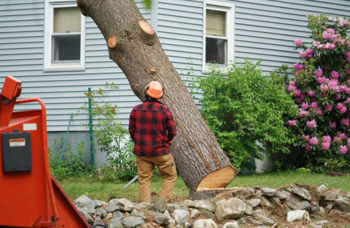 Tree Removal-Santee CA Tree Trimming and Stump Grinding Services-We Offer Tree Trimming Services, Tree Removal, Tree Pruning, Tree Cutting, Residential and Commercial Tree Trimming Services, Storm Damage, Emergency Tree Removal, Land Clearing, Tree Companies, Tree Care Service, Stump Grinding, and we're the Best Tree Trimming Company Near You Guaranteed!